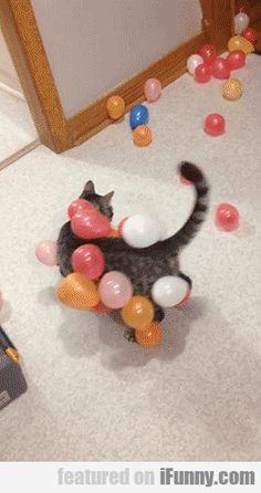 Static Electricity, A Cat And Several Balloons