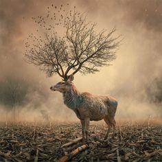 L'artiste et photographe Caras Ionut réalise des photographies surréalistes mettant en scène des personnages et des animaux dans des situati...