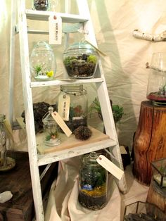 terrariums showcased on an old ladder bookshelf (cool idea for storing plants)