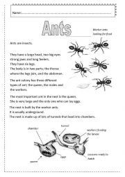 ant facts and worksheets more ant facts downlaoadable ant ...