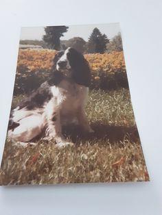 Chien Springer, Polaroid Film, Photos, Painting, Art, Art Background, Pictures, Painting Art, Kunst