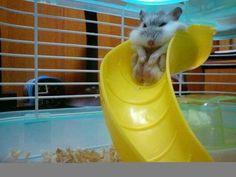 hamster slide