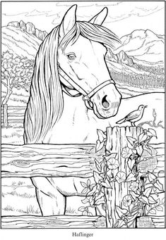 6 Horse Coloring Pages - - I live in Kentucky, which is horse country and am lucky to be able to see horses on farms all around me, I love them! If you love them too you'll also love these 6 wonderful horse coloring pa…. Horse Coloring Pages, Free Adult Coloring Pages, Flower Coloring Pages, Coloring Pages To Print, Free Printable Coloring Pages, Colouring Pages, Coloring Books, Coloring Sheets, Mandala Coloring