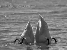 i'll follow you by Maurizio Di Renzo on 500px Follow You, Black And White, Collection, Black N White, Black White