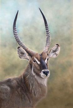 """Kobus"" Original Framed Pastel Painting of Waterbuck Bull - Henriette van Staden Pastel Portraits, Pet Portraits, Lilac Breasted Roller, Pastel Pencils, Wildlife Art, Tag Art, Original Art, The Originals, Painting"