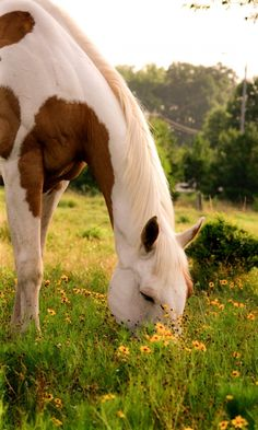 Horses And Dogs, Cute Horses, Horse Love, Animals And Pets, All The Pretty Horses, Beautiful Horses, Animals Beautiful, Chestnut Horse, White Chestnut