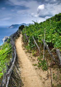 Cinque Terra-Trail leading to Manarola, Province of La Spezia , Liguria region Italy