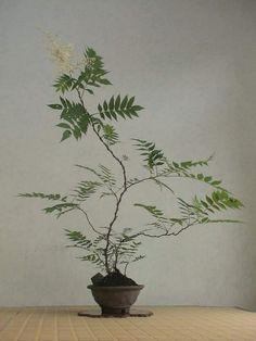 Botanical Interior, Interior Plants, Garden Art, Garden Plants, House Plants, Bonsai Art, Bonsai Plants, Ikebana Arrangements, Flower Arrangements