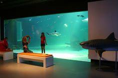 Médiathèque - Le Seaquarium - Aquarium marin dans le Gard au Grau-du-Roi - poissons, requins, phoques et otaries Nîmes, Montpellier Languedoc-Roussillon