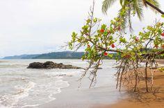 Northern end Playa Colorada Tranquilo Lodge Drake Bay, Osa Peninsula Costa Rica #fishing #travel #vacation #food