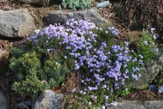 Building a Rock Garden,Everything You Wanted To Know