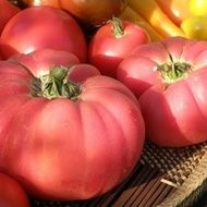 Brandywine Tomato has large pinkish fruit with an excellent flavor that can weigh up to lbs. It is one of the most popular of the heirloom tomatoes. Brandywine tomato has potato-leaf type leaves Growing Tomatoes From Seed, Varieties Of Tomatoes, Growing Tomatoes In Containers, Growing Vegetables, Grow Tomatoes, Baby Tomatoes, Dried Tomatoes, Cherry Tomatoes, Roasted Tomatoes