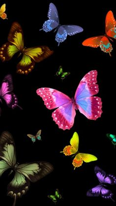 'Butterflies wildlife ' Canvas Print by