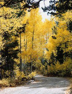 Aspen Drive in the Fall (California) Christine B. © 2002