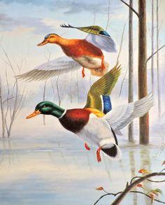 Bruno Augusto. Ducks