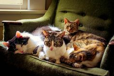 mostlycatsmostly:    Grimm, Bronson, Willow, and Gaia (by amberlgrunden)