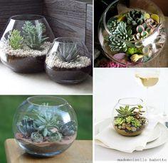 Suculent terrarium