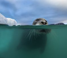 Love this one too! Arctic coast photography - Audun Rikardsen.