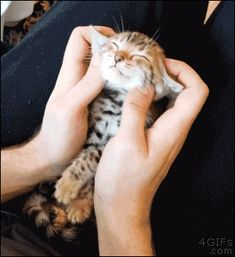 Share this A kitten enjoys a face massage Animated GIF with everyone. is best source of Funny GIFs, Cats GIFs, Reactions GIFs to Share on social networks and chat. Animals And Pets, Baby Animals, Funny Animals, Cute Animals, Animal Babies, Cute Kittens, Crazy Cat Lady, Crazy Cats, Gato Anime