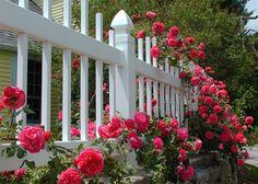 Northeast Massachusetts > Rose Cottage fence