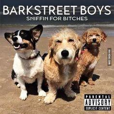 Dogs posed like a boy band