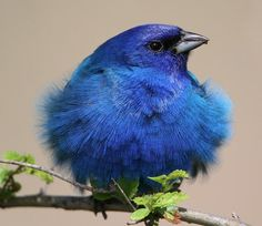 Blue Bird - www.inews-news.com - birds  birds birds