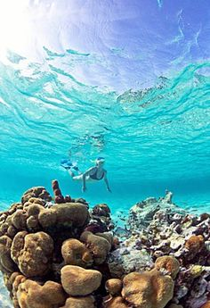 Belize Barrier Reef, or any reef =)