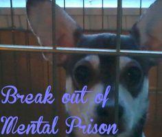 Mental Prison Chihuahua