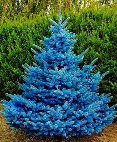 2d30e64b261 TO ORDER   ali.pub 2bqbfd 30 pcs bag blue spruce trees