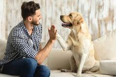 The bond we share with our pets is incomparable. From loving them to taking care pets are our children. Here's why men have Stronger emotional bonds with dogs than humans. Dog Training Videos, Brain Training, Training Your Dog, Toy Australian Shepherd, English Shepherd, Most Expensive Dog, Elephant Nature Park, Baby Raccoon, Pet Clinic