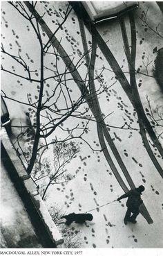 Tracks in the snow. Andre Kertesz