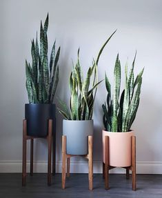 26 Gorgeous Interior Design with Indoor Plants As discussed before, interior decoration is seldom taken on because of the light of center. Indoor plants ought to be an essential part of every interior. House Plants Decor, Plant Decor, Cactus Decor, Home Plants, Cactus Art, Living Room Decor, Bedroom Decor, Bedroom Plants, Indoor Planters