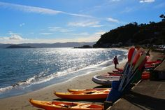 Take a closer look around Wellington with this collection of unique local photographs. Use our image galleries to inspire and help you plan your next Wellington trip. New Zealand Beach, Long White Cloud, South Island, Us Images, Maui, Beaches, Feels, Landscape, Amazing