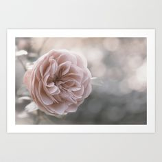 "Art Print / MINI (10"" x 7"") Originalaufnahme (originalaufnahme) the last Roses by Originalaufnahme $18.00  #posters #artworks #graphic design #texture #inspiration #artists #stretched canvas #illustrations #room #products #pretty #colour #inspiration #Wall Art #Home Decor #Throw Pillows #Cards #Mugs #Shower Curtains #Wall Tapestries#Duvet Covers #Rugs #Wall Clocks #Art Prints #Framed Art Prints #Canvas Prints #Editions #Wall Tapestries"