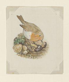 drawing | Beatrix Potter | pencil, ink, watercolour