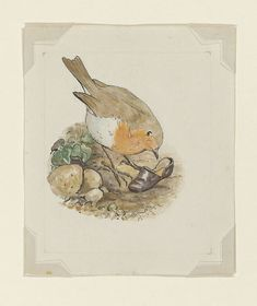 "peterrabbit2007: ""One of my favorite illustrations from The Tale of Peter Rabbit - the cute robin who discovers Peter's lost shoe. """