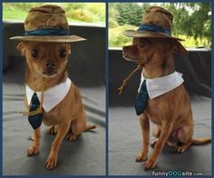 Well Dressed Dog -  #dogs #funny #cute