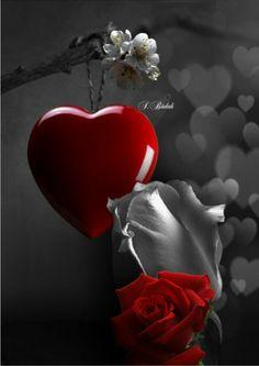 ❥●❥ ♥ ♥ ❥●❥ هناك من يِـحبك سنين وَيضيِّع كُل آلسنين فِـي لحظــة !  وَهنآك شخص يحبك فِي لحظة ! فيجبركَ أن تتركَ سنين الماضي  لـ تحبه كل لحظة ..