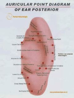 Acupuncture is a way of providing relief from a variety of ailments and for improving health. Find out how you can slow down the aging process with acupuncture. Alternative Therapies, Alternative Health, Alternative Medicine, Acupuncture Points Chart, Acupressure Points, Cupping Therapy, Massage Therapy, Ear Reflexology, Reiki