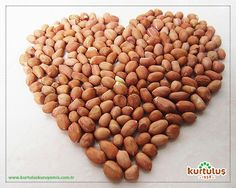 Mono doymamış yağlar ve oleik asitler içeren fıstık, koroner kalp hastalıklarını önler. www.kurtuluskuruyemis.com.tr #fıstık #kuruyemiş #sağlıklıbeslenme