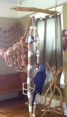 Hyacinth macaw climbing new rope ladder;)