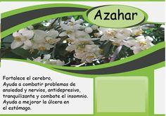 Orange blossom # Azahar # بهار نارنج Barcelona, Vegetables, Food, The Brain, Orange Blossom, Essen, Barcelona Spain, Vegetable Recipes, Meals