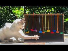 Cat Tree House, Cat House Diy, Diy Cat Tower, Diy Cat Tent, Cardboard Cat House, Homemade Cat Toys, Cat Playground, Cat Enclosure, Cat Room
