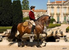 Lusitano horse in Queluz Palace - Enjoy with ON Tours