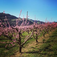 Spring is in the air! This is the most beautiful time of the year! #casolavalsenio - Instagram by marije_yoga