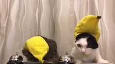 Image result for cats ringing bells for food