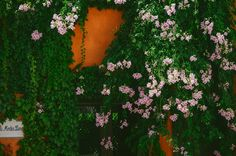 Flowers in Cordoba #cordoba #andalusia #alandalus #espana #spain ingephotography.nl