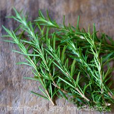 Rosemary is one of the most commonly used spices out there. But what do you know about the health benefits and side effects of rosemary? Rosemary is nati. Alzheimers, Natural Mosquito Repellent Plants, Anti Inflammatory Herbs, Rosemary Herb, Rosemary Water, Rosemary Potatoes, Aromatic Herbs, Diy Wedding Flowers, Growing Herbs