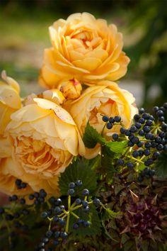 Beautiful roses .