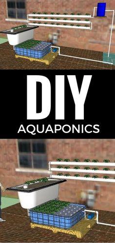 DIY Aquaponics http://vid.staged.com/vUft